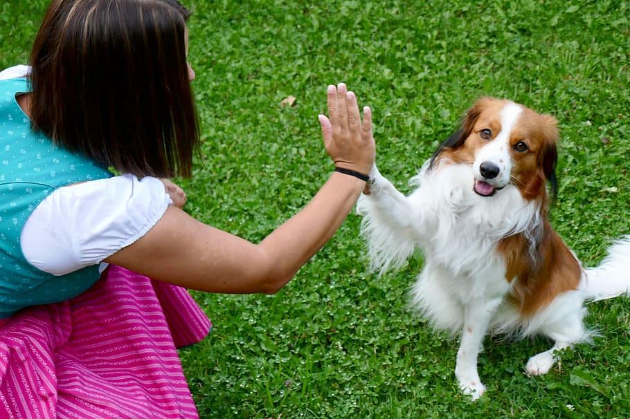 Собака и человек дают пять фото
