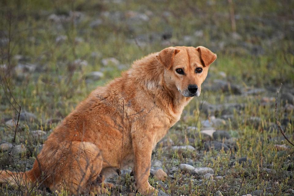 Рыжая бездомная собака дворняга сидит на траве фото