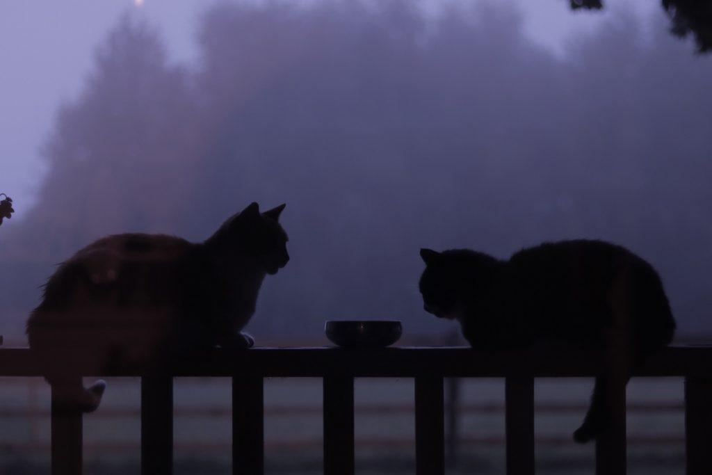 Кошки на заборе ночью красивое фото