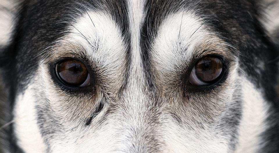 Глаза собаки крупным планом фото