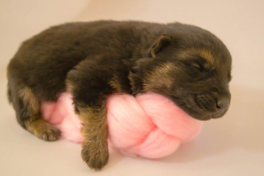 Новорожденный щенок фото