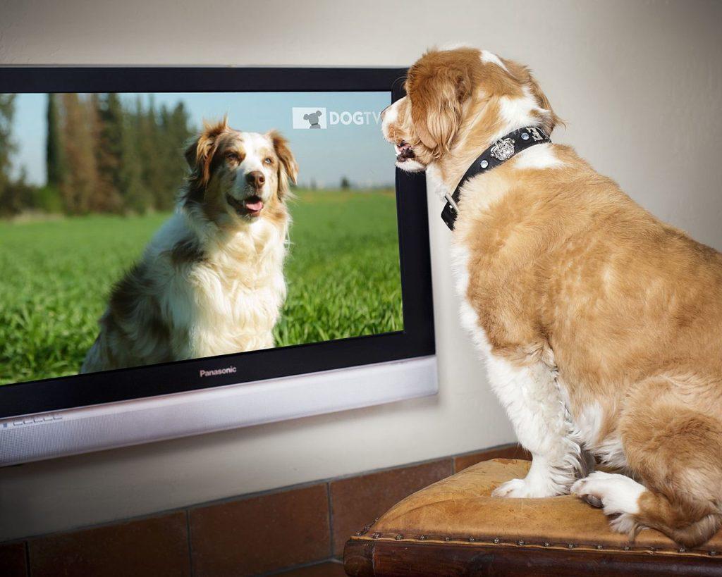 Собака смотрит телевизор фото