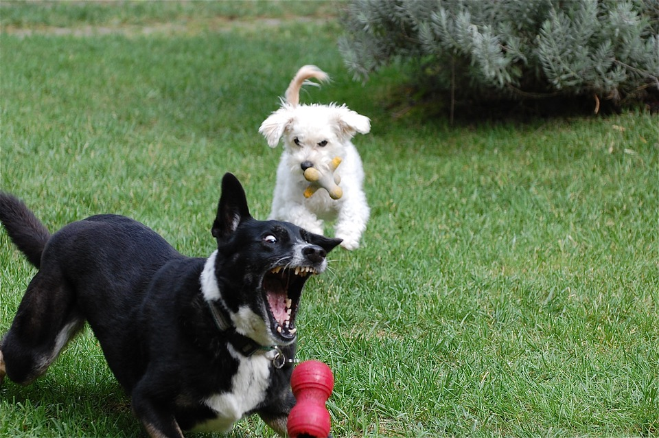 Собаки играют с игрушками фото