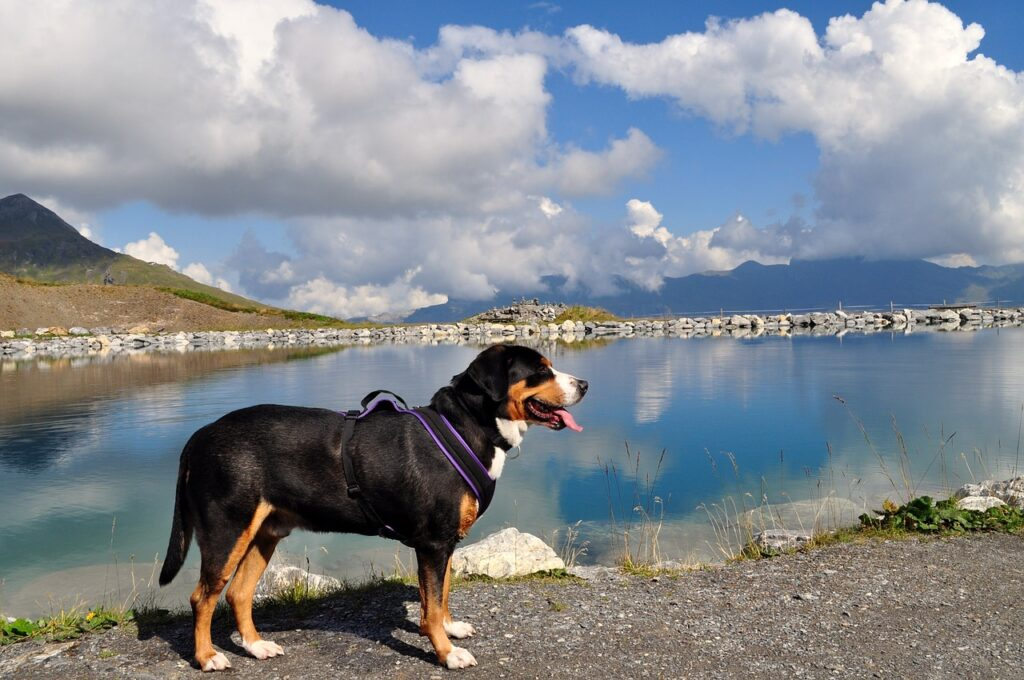 Поход с собакой на берегу озера фото