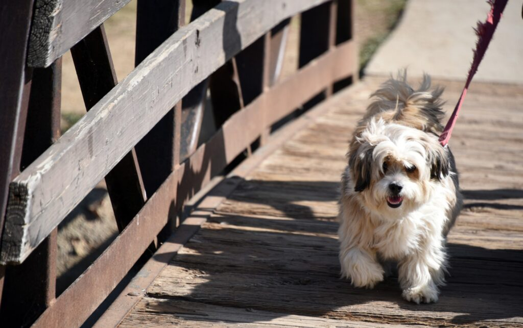 Прогулка с собакой фото
