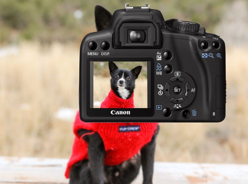 Фотографирование собаки фото