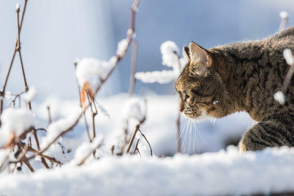 Кошка полосатая на снегу фото