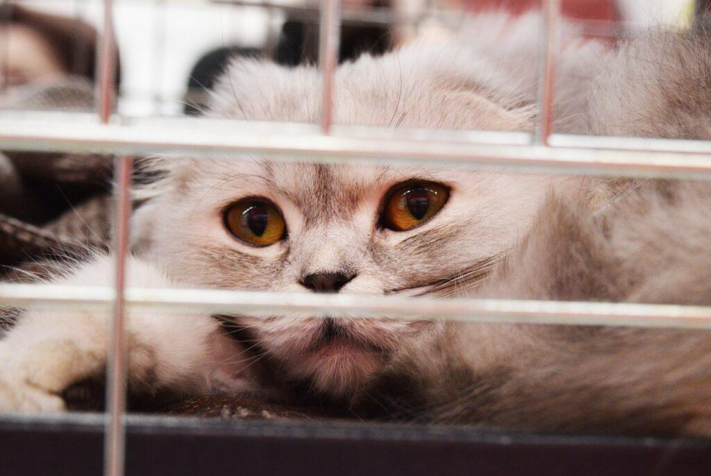 Кошка в клетке крупным планом фото