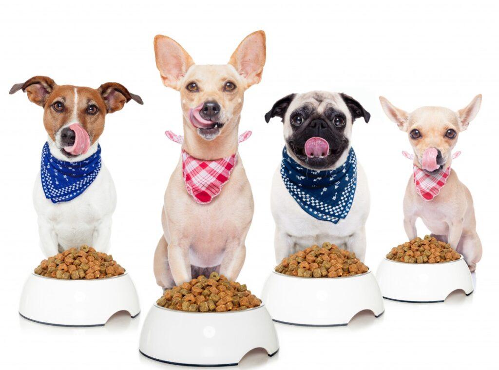 4 собаки перед мисками облизываются фото