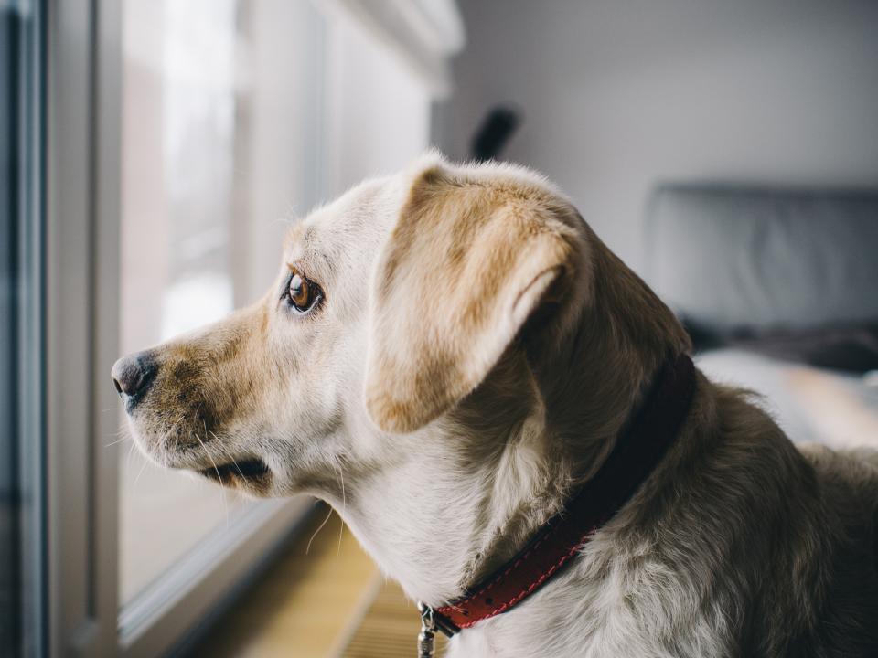 Собака смотрит в окно фото
