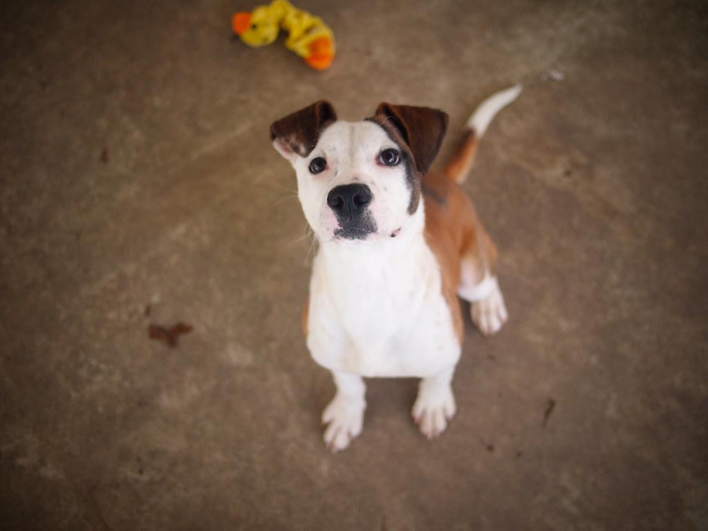 Дрессировка щенка 6 месяцев фото