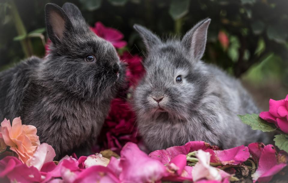 Декоративные кролики красивое фото