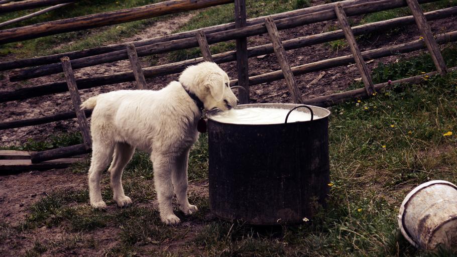 Щенок пьет молоко фото