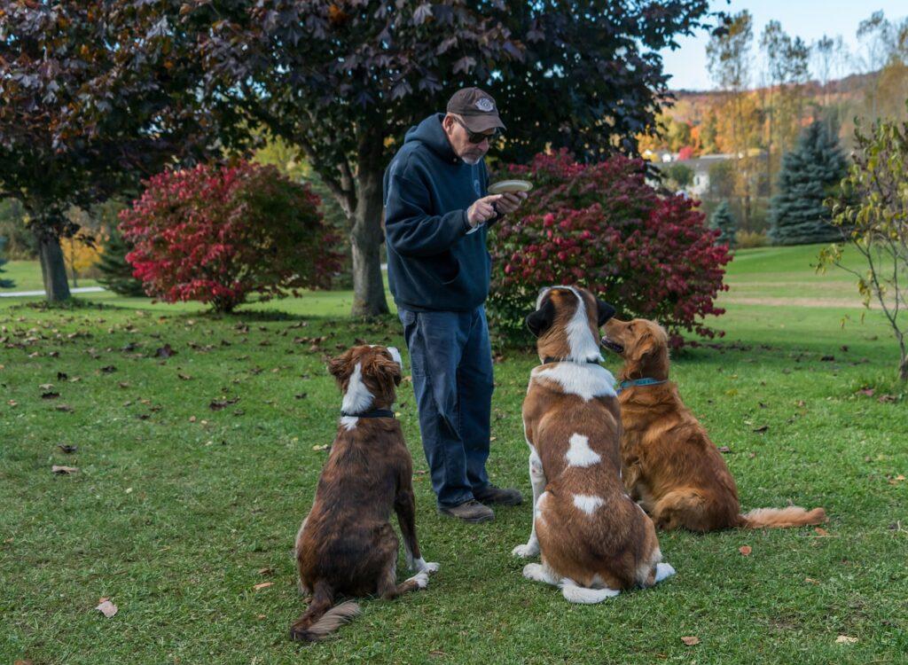 Человек дрессирует трех собак фото