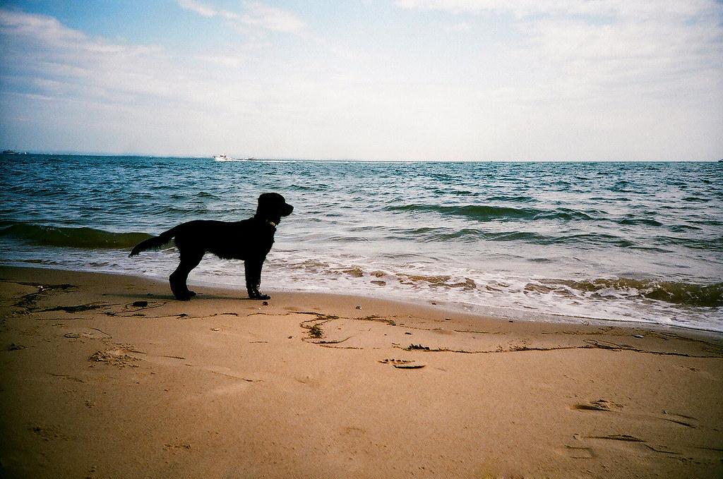 Собака на море фото