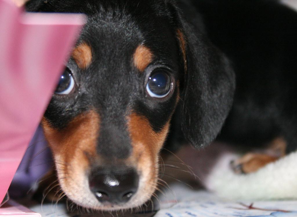 Собака прячется крупным планом фото