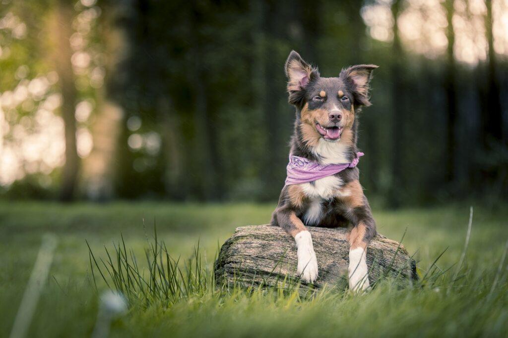 Собака в косынке на поляне на пеньке фото