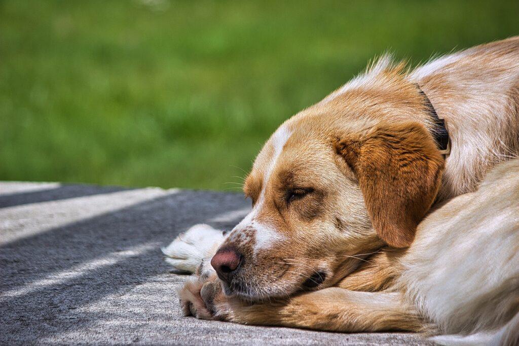 Собака спит на улице крупным планом фото