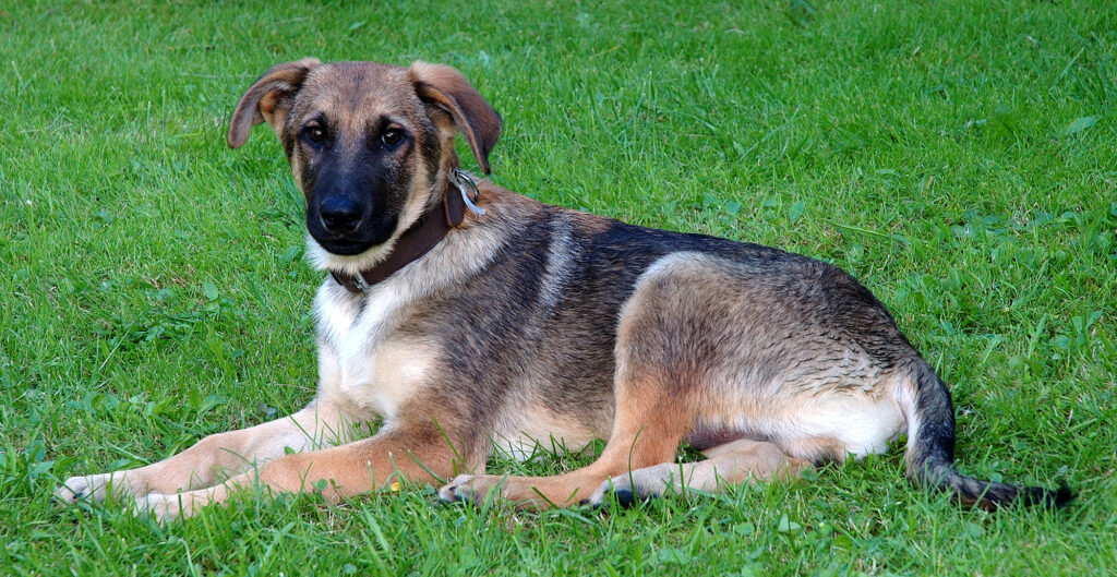 Собака-подросток дворняга фото