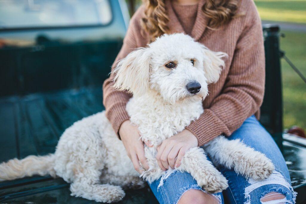 Белая собака на коленях у человека фото