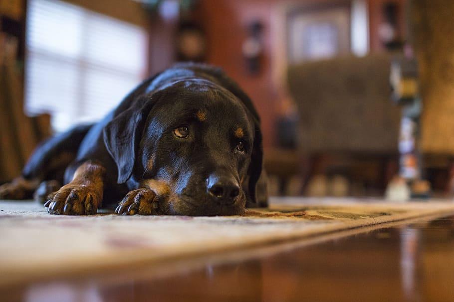 Большая грустная собака фото