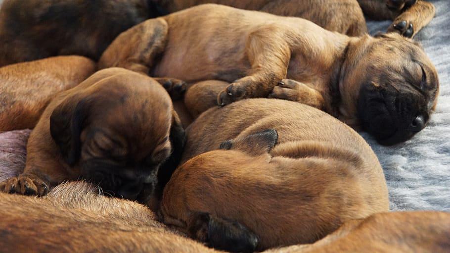 Маленькие щенки спят фото