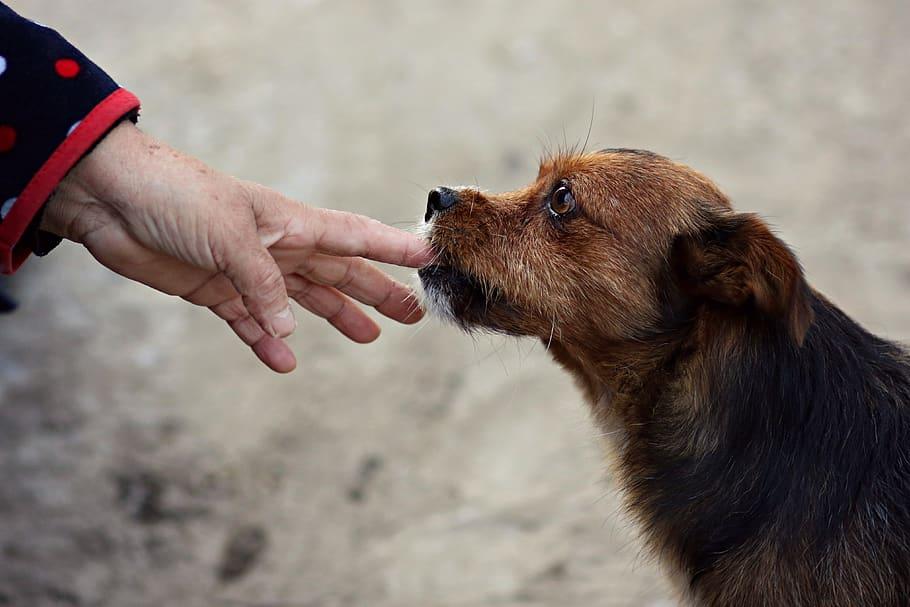 Собака и рука человека крупным планом фото