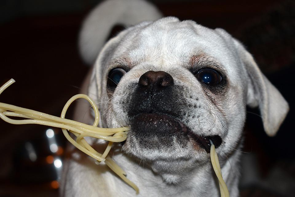 Собака ест макароны фото