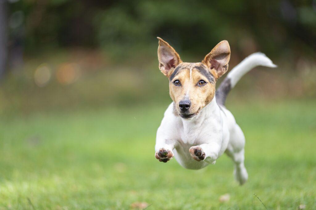 Собака бежит по траве фото