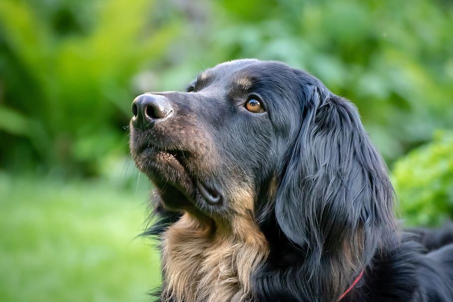 Собака смотрит вверх крупным планом фото