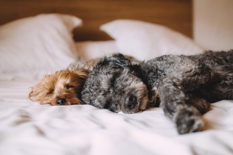 Две собаки спят на кровати фото крупным планом