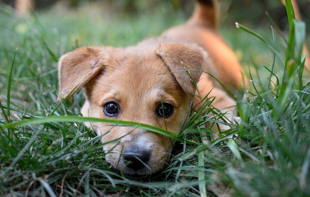 Рыжий щенок в траве фото